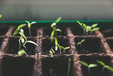 Crescer empresa